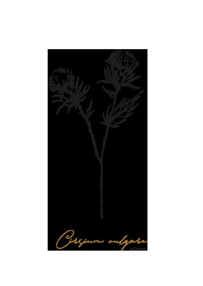 gezeichnet handgezeichnet Illustration Blume Logo Herz Lineart Distel